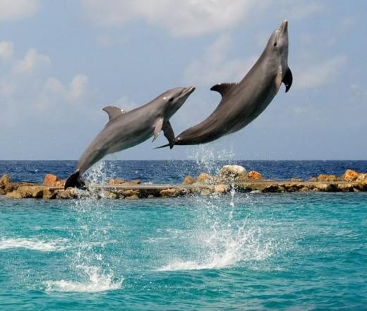 Tela and Pasku; Curacao
