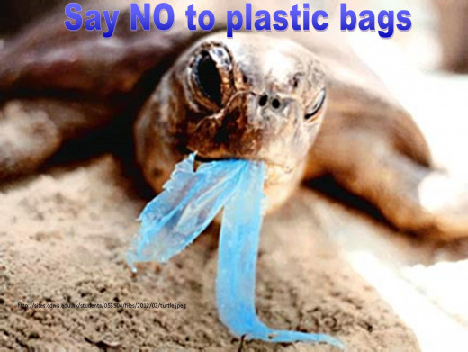 The turtles, that usually eats jellyfish, often mixes a plastic bag for a jellyfish and tries to eat it.