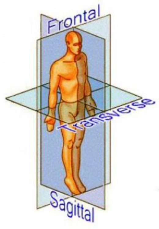 The 3 Planes of Motion - Sagittal, Transverse, and Frontal planes.