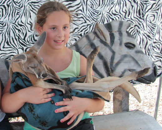 One of the most exciting exhibit at the wild animal park where the kids and adults too can hold this beautiful spirited kangaroo and have a professional photo taken as well as taking your own.