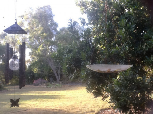 The bird feeder outside our bedroom window. The king parrots have just flown away :)