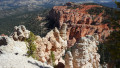 Twisted Junipers: Poems of the Utah Desert