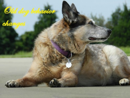 Brain Aging Causes Personality Changes in Old Dogs