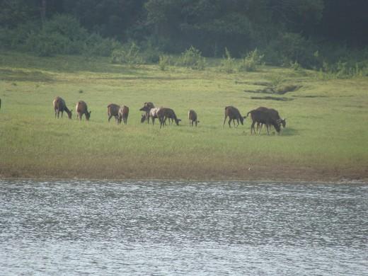 Herd of deers having their food - 2