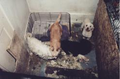 Stop the Practice of Puppy Mills