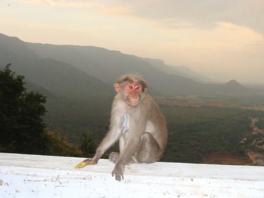 Monkey seen on the way to Thekkady