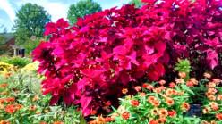 Lewis Ginter Botanical Gardens Photo Tour