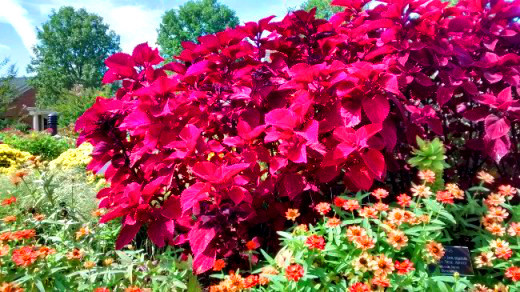 Lewis Ginter splashes color everything in the spring, summer and fall.