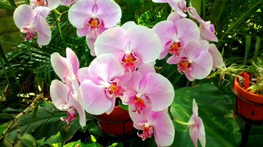 An orchid collection is one of the highlights of The Conservatory.