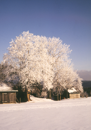 A frosty winter morning on the farm