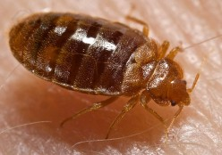 Bed Bugs in Your Home!
