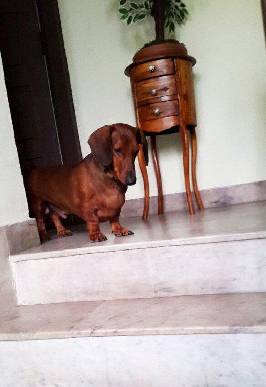 """Catch me if you can says """"Robbie our family pet"""" hiding upstairs after his doggie pranks"""