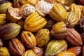 Cacao and Cacao Nibs: Health Benefits and Properties. Did you know this?