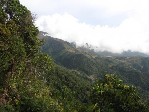 Panamanian Cloud Forest