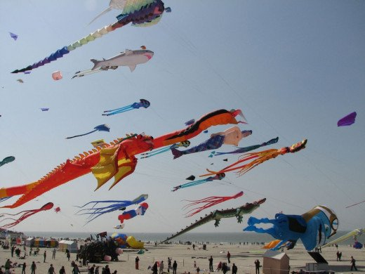 Kite Flying Contest, Beer Festival Show, Food Festival Show, Flower Exhibition, Cycling Final and Chess Contest