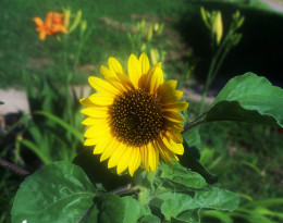 A flower...reflects the sun's fine light...