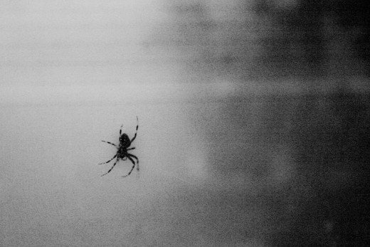 What does it mean if you see a spider on Halloween?