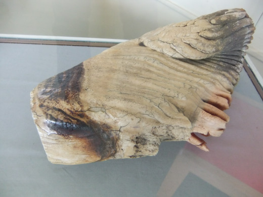 Fossilised Elephant's Tooth