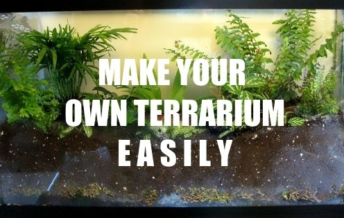 How to Make a Plant Terrarium