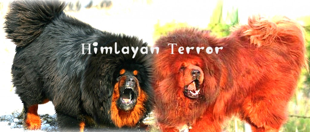Himalayan Mountain Dogs Pethelpful