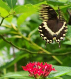 A Photo Story of Butterflies and the Butterfly Cycle