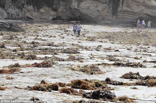 Anybody up for a walk among the fly infested kelp piles on a sunny SoCal beach?