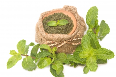 Herbs Scent that Improves your Health