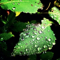Rights of the religious in the military