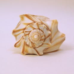 Do we get our moral code from the bible?