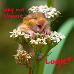 Pro Choice ~ Pro Life ~ Pro Logic