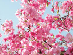 Blossoms of The Heart. A Sonnet, to my Dear Friend, Nellieanna Hay