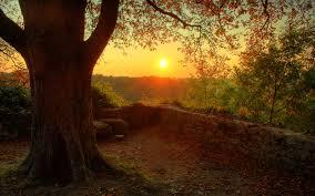 Calming sunset wallpaper