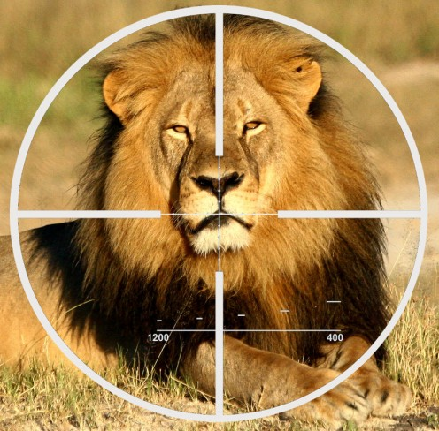 Photo adapted from Wildlife Conservation Research Unit photo of Cecil the lion