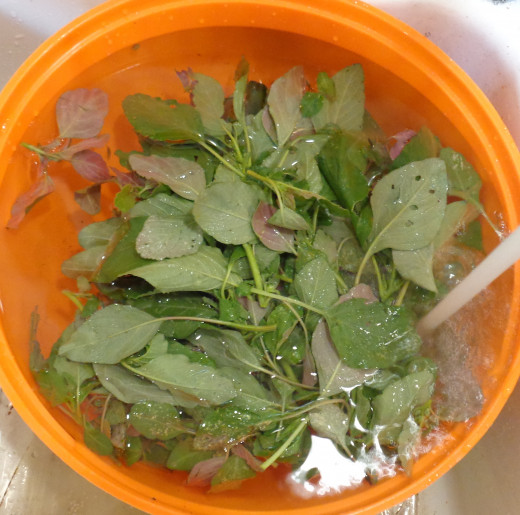 Washing amaranth greens prior to cooking
