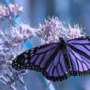 ButterflyWings profile image