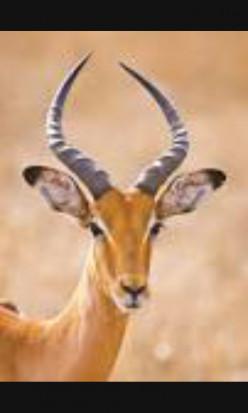 Antelope police ( Natural born killers).
