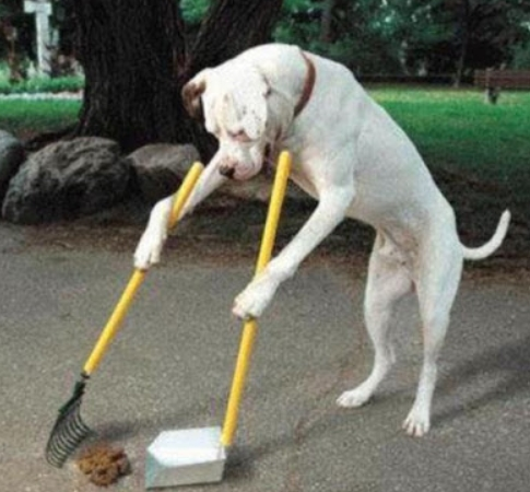 If you don't clean the mess, train your dog to do so