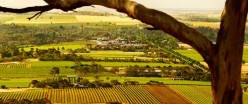 Famous wine-producing region with a German Lutheran history.