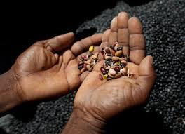 Choosing good seed