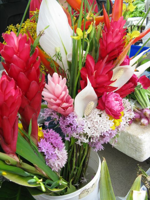 """Kauai is filled with beautiful flowers. Perhaps that is why it is called """"The Garden Island."""""""