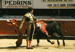 Bullfights.  Love 'em, or hate 'em, there here to stay