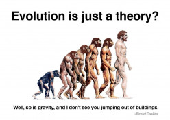 Why Evolution Is The More Viable Theory