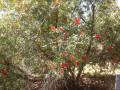 Diary of a Cackleberry Farmer (September Edition)