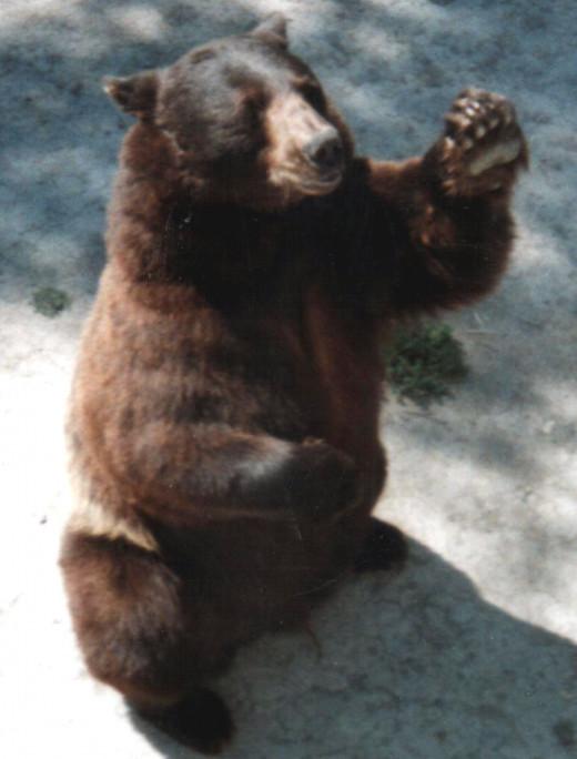 Bear World, Idaho 08/06