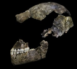 Are We Homo Naledi?