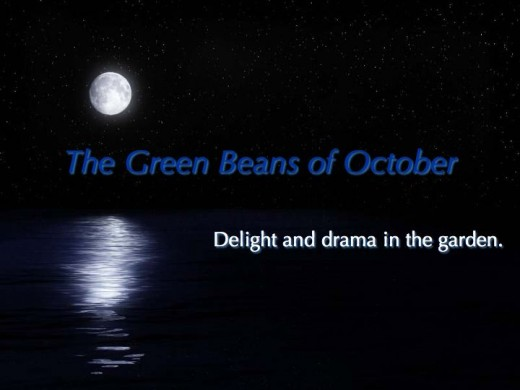 The green beans of October: Delight and Drama in the Garden