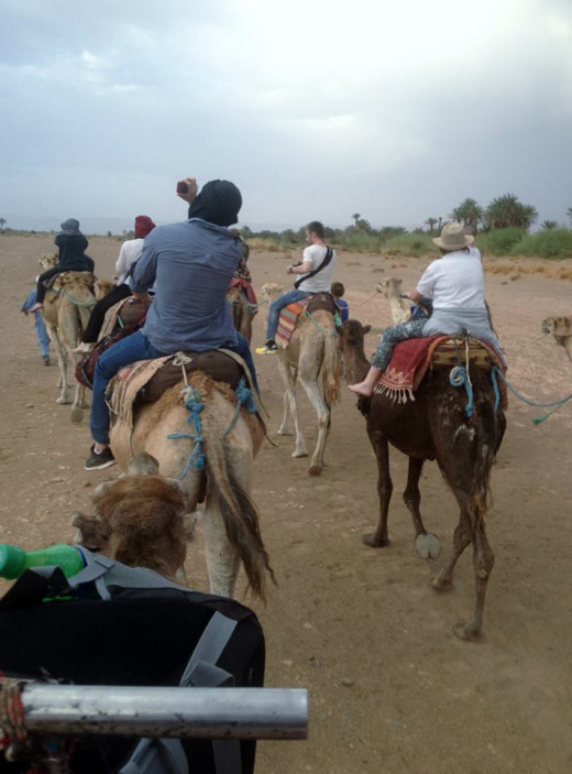 Camel trail into the desert