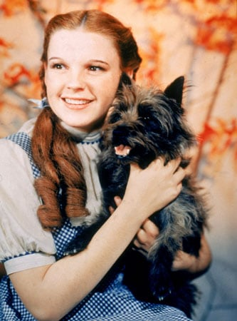 Dorothy in Wizard of Oz (1939) played by Judy Galand