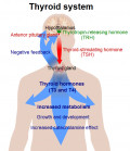 The Effects of Hypothyroidism