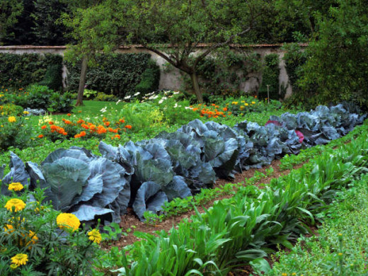 You can create a productive garden with flower borders